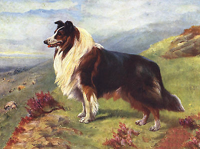 Rough Collie Guarding Flock Lovely Dog Greetings Note Card