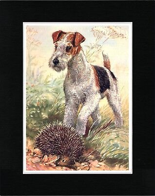Wire Fox Terrier Finds Hedgehog Vintage Style Dog Print Matted Ready To Frame
