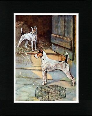 Smooth And Wire Fox Terrier Dogs Vintage Style Dog Art Print Ready Matted