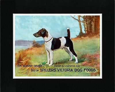 Smooth Fox Terrier Vintage Style Dog Food Advert Art Print Matted Ready To Frame