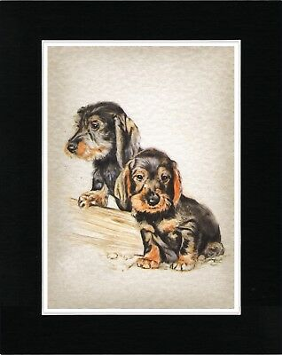 Wire Haired Dachshund Puppies Lovely Vintage Style Dog Art Print Ready Matted