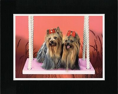 Yorkshire Terrier Dogs On A Swing Lovely Dog Art Print Ready Matted