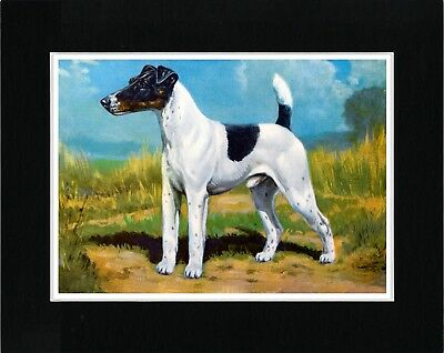 Smooth Fox Terrier Lovely Vintage Style Dog Art Print Matted Ready To Frame