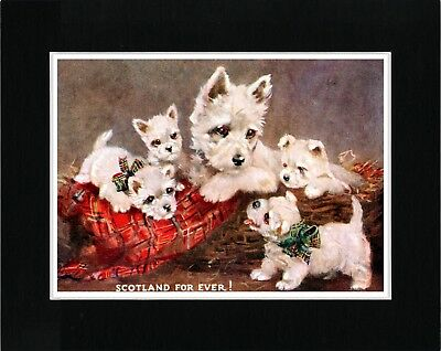 Westie Terrier Mother And Puppies Vintage Style Dog Art Print Ready Matted