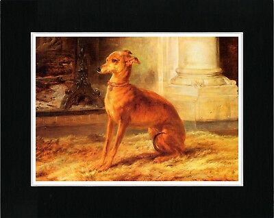 Seated Italian Greyhound Lovely Image Vintage Style Dog Art Print Ready Matted