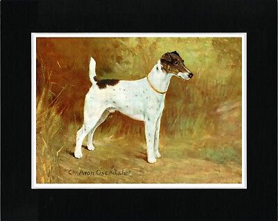 Smooth Fox Terrier Named Early Champion Dog Vintage Style Art Print Ready Matted