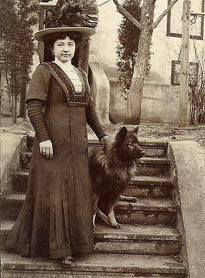 Keeshond Charming Dog Greetings Note Card Edwardian Lady With Dog On Steps