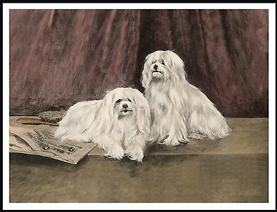 Maltese Two Dogs Lovely Vintage Style Dog Art Print Poster