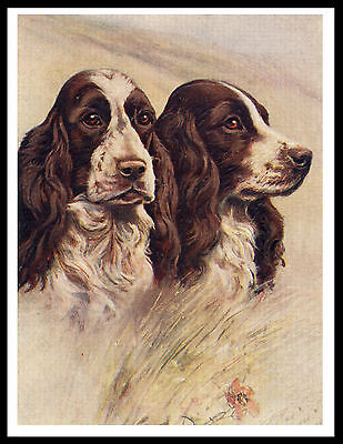 English Springer Spaniel Two Dogs Head Study Vintage Style Dog Print Poster