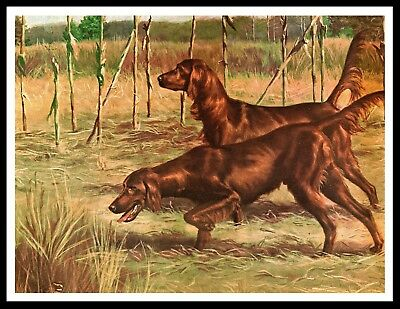 Irish Setter Dogs In A Cornfield Great Vintage Style Dog Print Poster