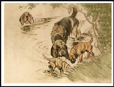 Otterhound And Border Terrier Dogs On Hunt In Stream Lovely Dog Print Poster