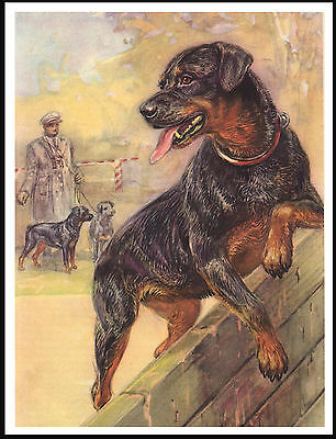 Rottweiler Going Over Wall In Training Great Vintage Style Dog Art Print Poster