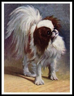 Japanese Chin Lovely Vintage Style Dog Art Print Poster