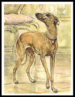 Italian Greyhound Lovely Vintage Style Dog Art Print Poster