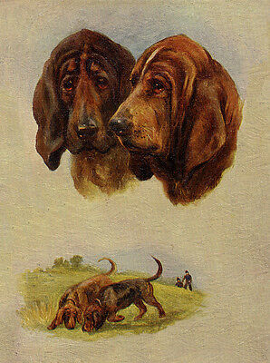 Bloodhound Charming Dog Greetings Note Card Two Beautiful Dogs