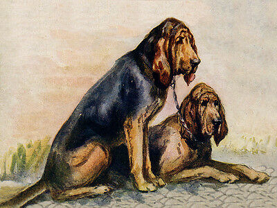 Bloodhound Charming Dog Greetings Note Card Two Beautiful Sitting Dogs