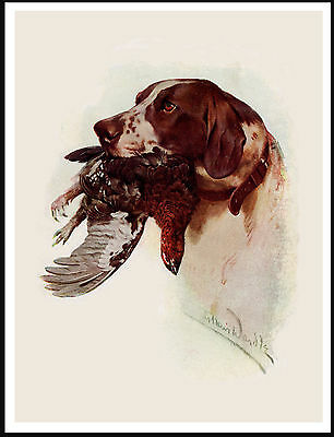 Pointer Head Study With Bird Lovely Vintage Style Dog Print Poster