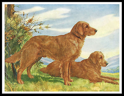 Golden Retriever Two Dogs Great Vintage Style Dog Print Poster