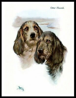 Otterhound Great Head Study Vintage Style Dog Print Poster