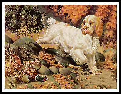 Clumber Spaniel Dog And Pheasant Great Vintage Style Dog Print Poster
