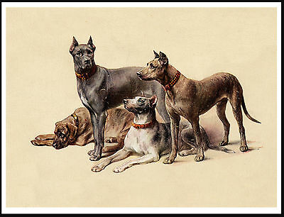 Great Dane Group Of Dogs Lovely Vintage Style Dog Art Print Poster