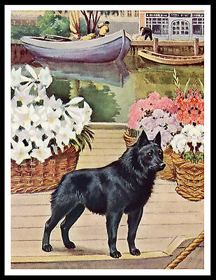 Schipperke On A Barge Lovely Vintage Style Dog Art Print Poster