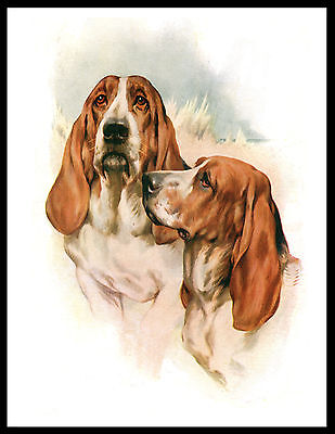 Basset Hound Two Dogs Head Study Lovely Vintage Style Dog Art Print Poster