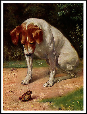 Smooth Fox Terrier Examines Frog Charming Vintage Style Dog Print Poster
