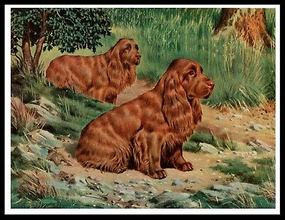 Sussex Spaniel Two Dogs Great Vintage Style Dog Art Print Poster