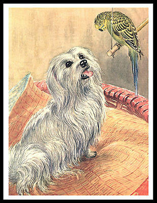 Maltese And Parrot Charming Vintage Style Dog Art Print Poster