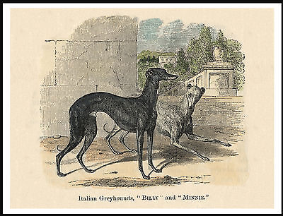 Italian Greyhound Two Dogs Charming Vintage Style Image Dog Print Poster