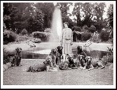 Golden Retriever Lady And Her Dogs Great Vintage Style Dog Photo Print Poster