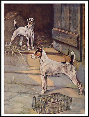 Wire And Smooth Fox Terrier Dogs Great Vintage Style Dog Art Print Poster
