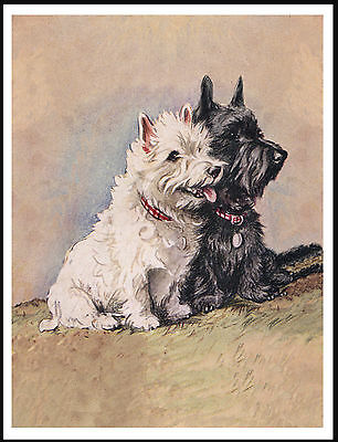 Westie West Highland And Scottish Terrier Dogs Lovely Dog Print Poster