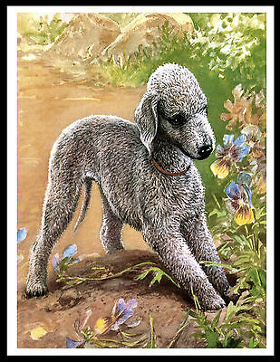 Bedlington Terrier In Garden Lovely Vintage Style Dog Print Poster