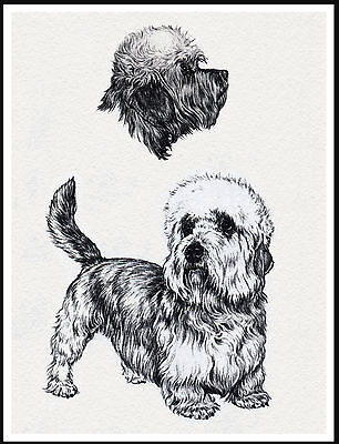 Dandie Dinmont Terrier Lovely Dog Sketch Print Poster