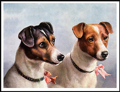 Jack Russell Fox Terrier Two Dogs Head Study Charming Dog Print Poster