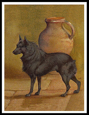 Schipperke On Vintage Style Dog Art Print Poster