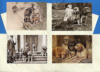Otterhound Pack Of 4 Vintage Style Dog Print Greetings Note Cards