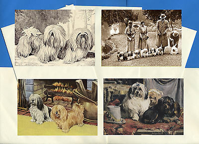 Lhasa Apso Pack Of 4 Vintage Style Dog Print Greetings Note Cards
