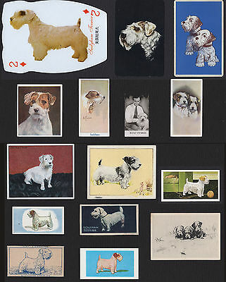 15 Vintage Sealyham Terrier Collectable Dog Cigarette And Trade / Breed Cards