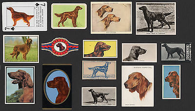 15 Irish Setter Vintage Collectable Dog Cigarette Breed/ Trade Cards Bands