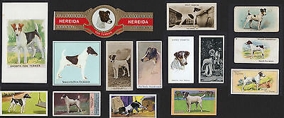 15 Vintage Smooth Fox Terrier Collectable Dog Cigarette Trade  Breed Cards Bands
