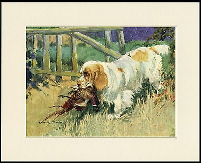 Clumber Spaniel With Bird Lovely Dog Print Mounted Ready To Frame