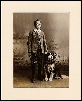 Bearded Collie Boy And His Dogs Lovely Mounted Dog Photo Print Ready To Frame