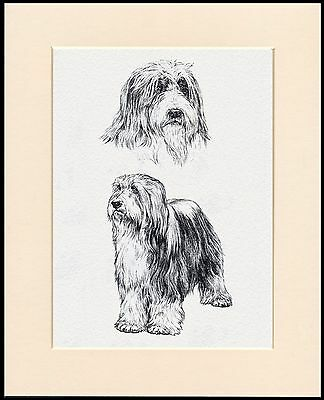 Bearded Collie Lovely Dog Sketch Print Mounted Ready To Frame