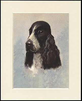 Cocker Spaniel Charming Head Study Dog Print Mounted Ready To Frame