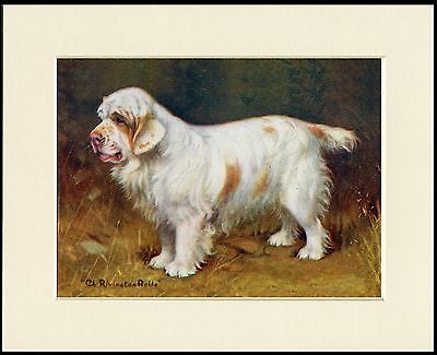 Clumber Spaniel Old Time Named Champion Dog Lovely Print Mounted Ready To Frame
