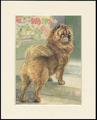Chow Chow Dog On Steps Lovely Print Mounted Ready To Frame