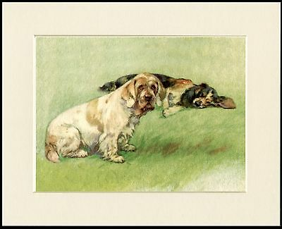 Clumber And Cocker Spaniel Dogs Lovely Dog Print Mounted Ready To Frame
